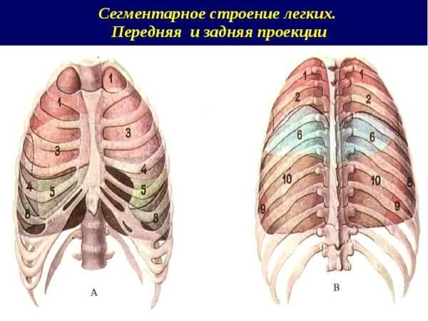 Все о сегментарной пневмонии у детей. Каково преимущество дифференциальной диагностики?