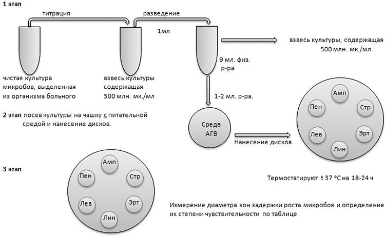 На картинке изображен диско-диффузионный метод определения чувствительности к антибиотикам
