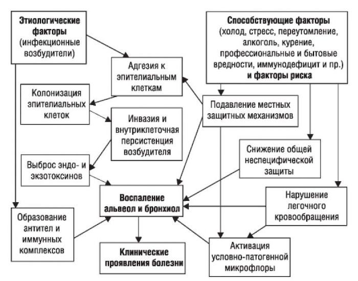 На картинке показан механизм развития вторичной инфекции легких